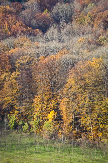 Herbst-4