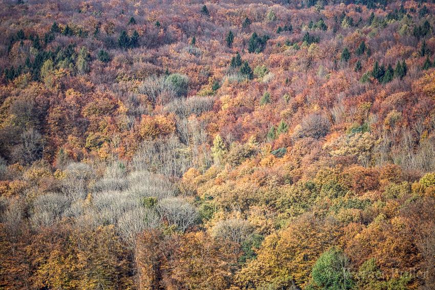 Herbst-7