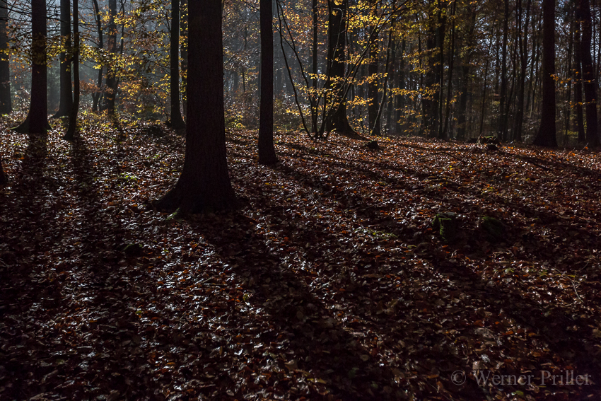Herbst-9